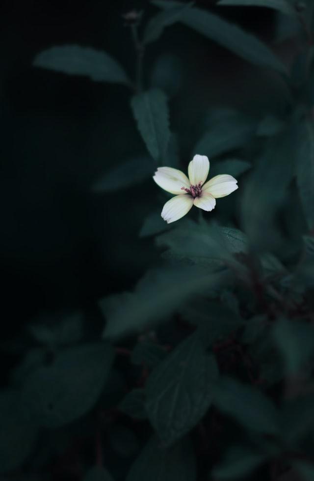 kwiaty do cienia
